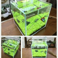 benih tanaman hias rumput akuarium aquascape-carpet seeds magic