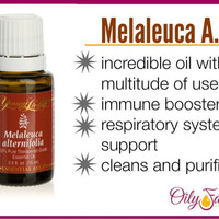 Young Living Essential Oil Melaleuca Alternifolia 15ml