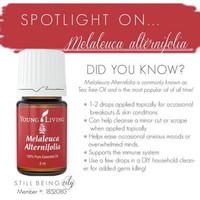 Young Living Essential Oil Melaleuca Alternifolia / tea tree5ml