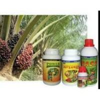 Harga paket budidaya kelapa sawit | Pembandingharga.com