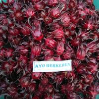 benih bunga rosella biji / bibit rosela