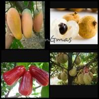 Paket berkebun bibit mangga Kelengkeng jambu durian