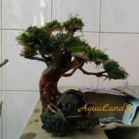 Bonsai Aquascape akar kayu rasamala hardscape aquascape
