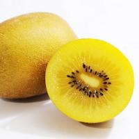 benih/biji/bibit buah kiwi gold  natural