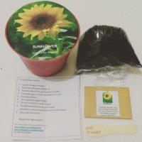 Gardening Starter Bunga Matahari