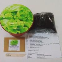 Gardening Starter Green Lettuce