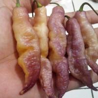 Benih / Bibit / Biji - Cabe Pink Tiger Pepper Seeds - IMPORT