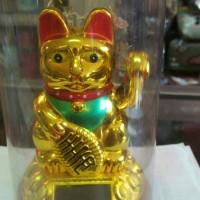 Jual kucing hoki solar (tg ) Murah
