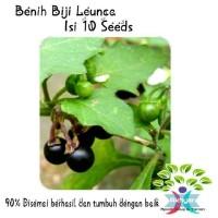 Benih Biji Leunca / Ranti Unggul Isi 10 Seeds