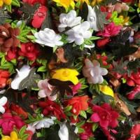 apikasi bunga