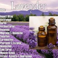 Lavender Oil/Pure Essential Oil 5 Ml