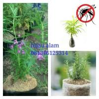 paket tanaman anti nyamuk / tanaman pengusir nyamuk
