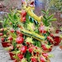 Jual Biji Benih Bibit tanaman Buah Naga Bonsai / Sekam / Baju / Celana / Hp Murah