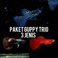 Paket Guppy Trio 3 Jenis