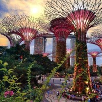 Tiket Gardens by the bay 2 dorms + OCBC skyway -Anak- Singapore PROMO