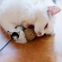 Bola Herbal Kucing Catnip Ball Bermain Sambil Gosok Gigi