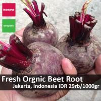 Buah bit / Beet Root fresh dari kebun