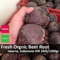 Buah Bit (Beet Root) Organik Fresh dari Kebun