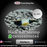 Udang hias Murah Black Rili  ikan hias aquascape   moss, anubias, dl