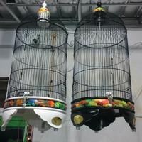 kandang burung radja original raibow warna putih dan hitam