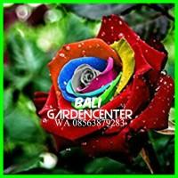 Benih Biji Bunga Mawar Mystic Pelangi Rainbow Rose