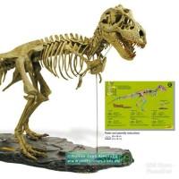 Dinosaurus T-Rex Skeleton Fossil Geoworld