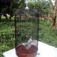 sangkar / kandang BNR lovebird
