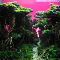 jasa setting aquascape