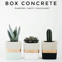 Pot Kaktus Mini Box Concrete Custom