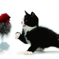Mainan Untuk Kucing Boneka Musang Per