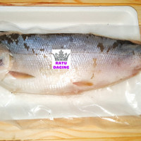 Katalog Ikan Bandeng Katalog.or.id