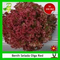 Benih Selada Merah Olga Red - Isi 200 Biji