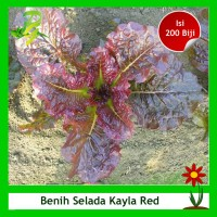 Benih Selada Merah Kayla Red - Isi 200 Biji