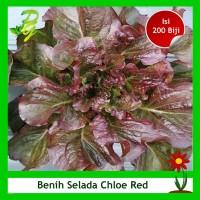 Benih Selada Merah Chloe Red - Isi 200 Biji