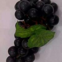 bibit tanaman buah anggur black caroline rose import