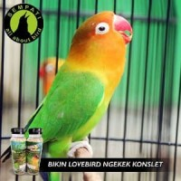 Baru F1 SERIES KONSLET PAKAN LOMBA BURUNG LOVEBIRD Limited