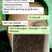 Daftar Harga Bibit Belut Jakarta Termurah 2019 – doodolan ce846de8b7