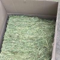 Timothy Hay Jerami Rumput Kering Makanan Alas Kandang Bukan Alfalfa