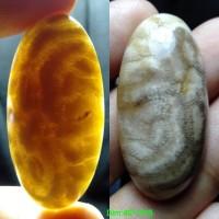 Harga Batu Akik Lipan Hargano.com