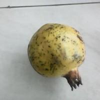 Harga Buah Delima Di Jakarta Hargano.com