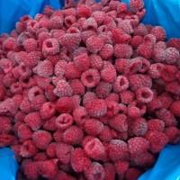 Buah Beku Raspberry Frozen IQF 1kg TERMURAH SEINDONESIA DIJAMIN MURAH