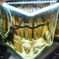 Harga Lampu Led Aquarium DaftarHarga.Pw