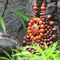 Harga kalung etnik kayu kopi top model bunga matahari in | Pembandingharga.com