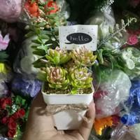 Jual Kaktus Mini Plastik Di Bali Harga Terbaru 2019