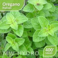 terlaris 400 seed - benih oregano italian (herbs/herbal) - import