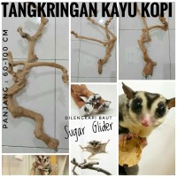 Harga Sugar Glider Jual Travelbon.com