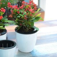 Pot Bunga / Tanaman dengan Bahan Plastik untuk Hiasan Dekorasi
