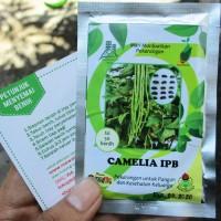 Kacang Panjang Camelia IPB