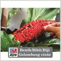 Bibit/Benih/Biji/Seed Bunga Gelombang Cinta
