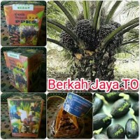 Benih Bibit Polong Kecambah SAWIT PPKS DxP Original